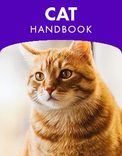 Cat Handbook placeholder image.