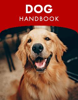Dog handbook placeholder image.