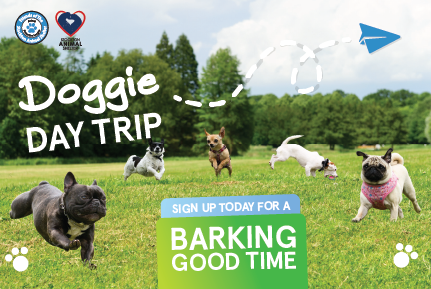 Doggie Day Trip Postcard Front