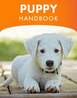 Puppy handbook placeholder image.