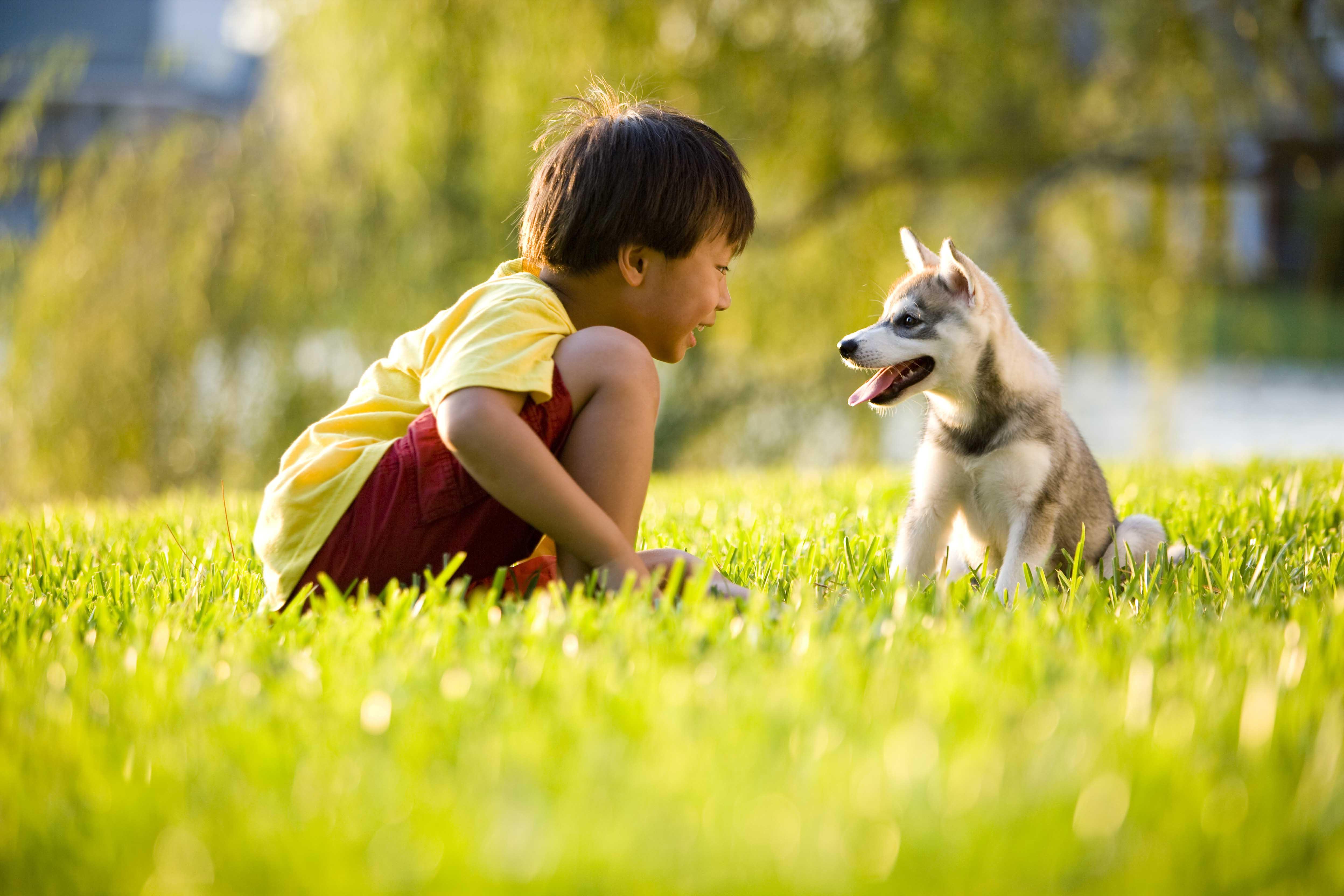 boy-and-puppy